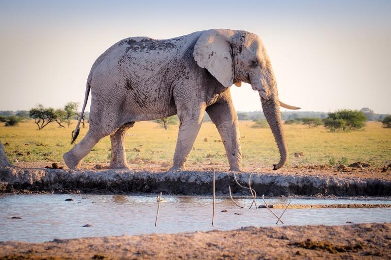 elephant-1209896_1280.jpg